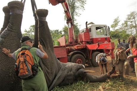 IVORY COAST PILOTS NOVEL ELEPHANT RESCUE